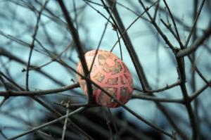 Egg in tree