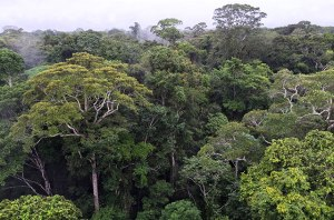 amazon-rainforest-canopy